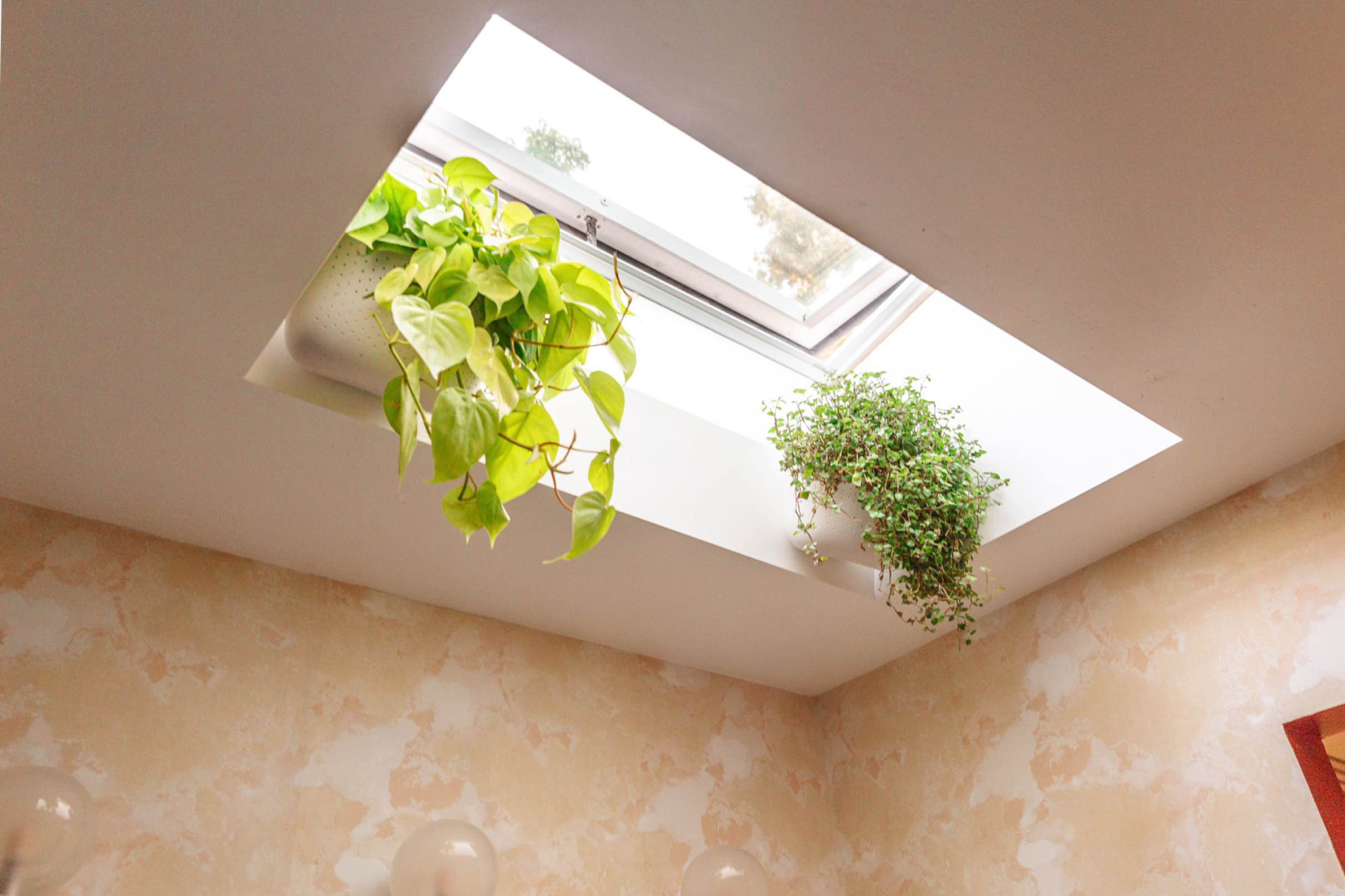 Studio plumb skylight with plantstmb