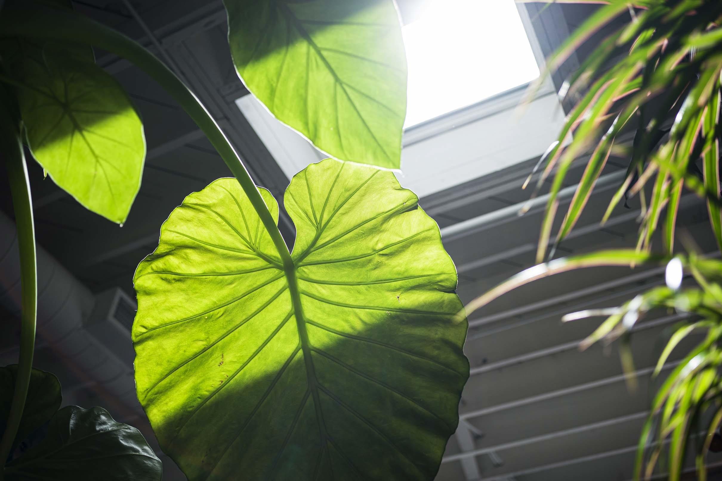 Skylight plant leaf sunlight small