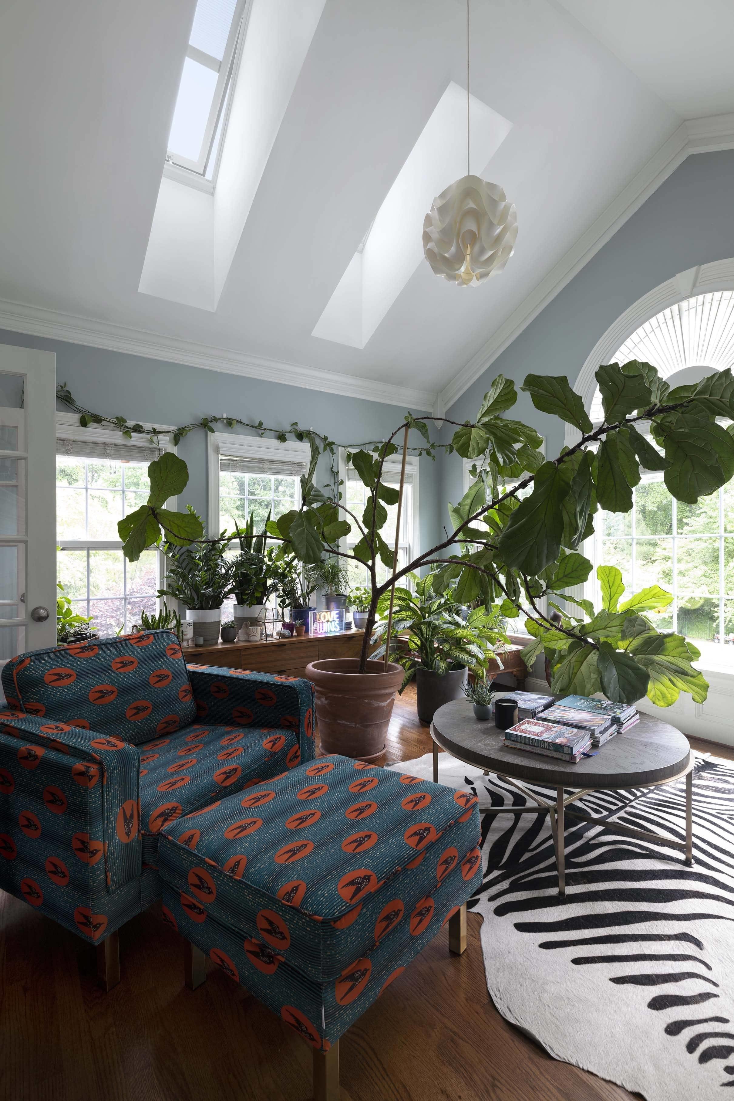 Sunroom skylights fiddle leaf fig light blue