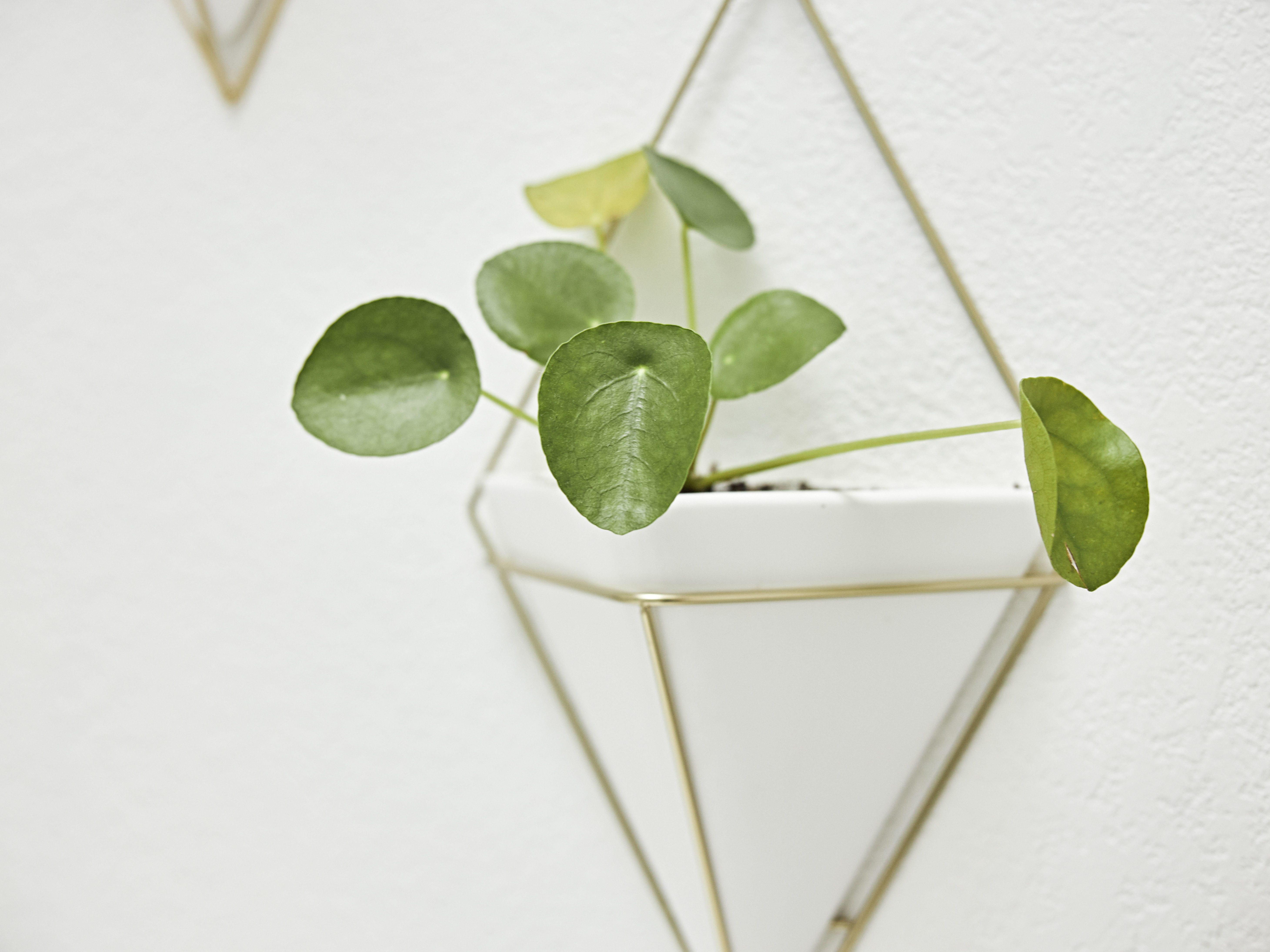 Plant-geometric-wall-hanger.jpg#asset:4487